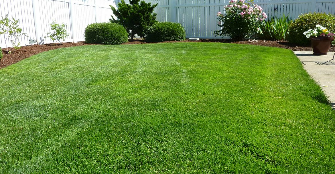 5 Steps to a Beautiful Lawn this Spring!