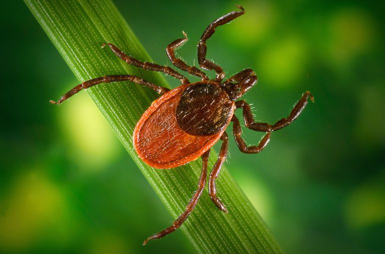 5 things to know about Ticks!